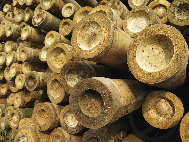 Perspective view of bamboo stacks. Tropical daytime no people background nature Indonesia photo