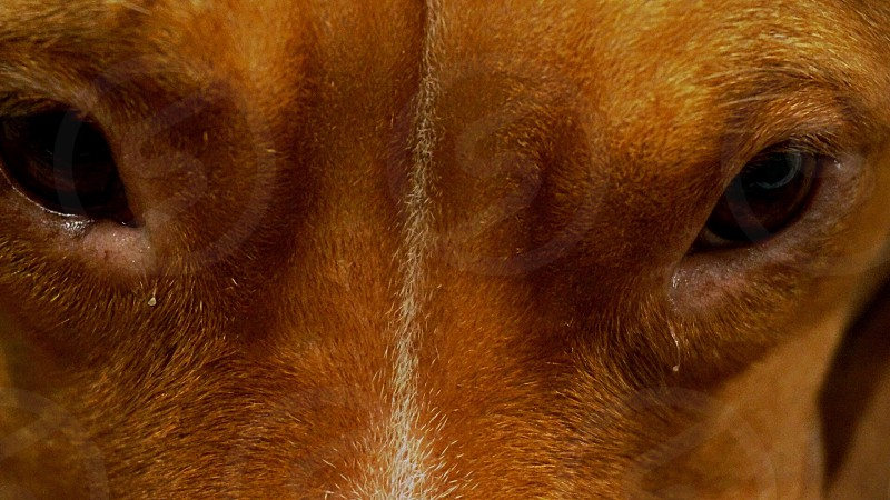 Dog pet eyes best friend photo