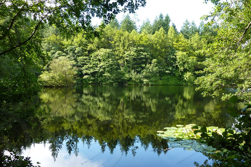 green trees near body of water during daytime photo