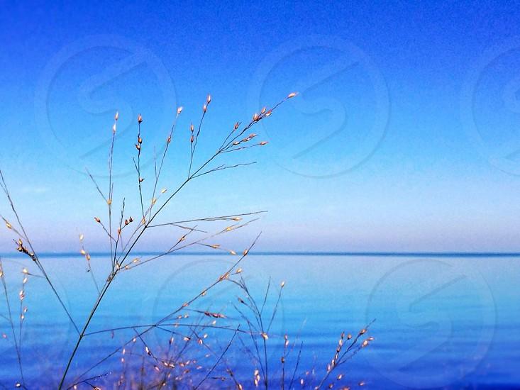 Morning on the lake.  photo