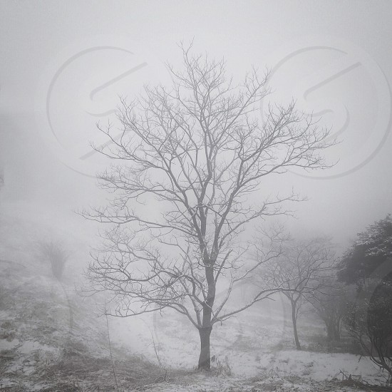 trees and white mist above photo