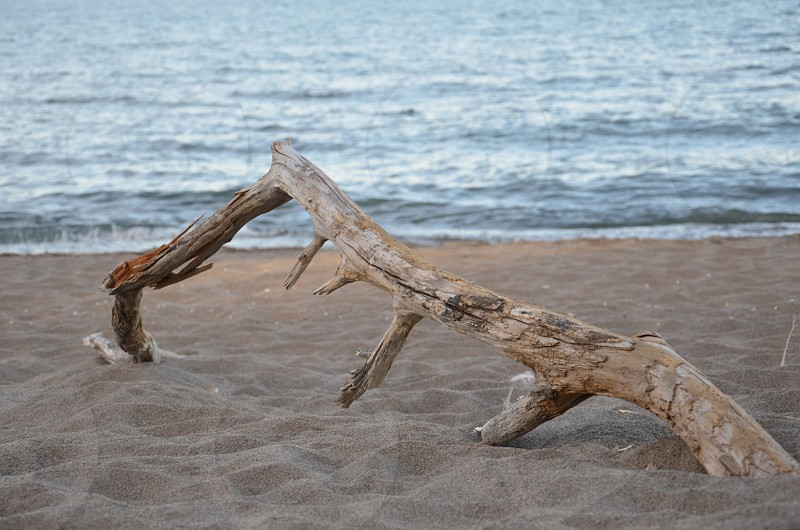 Driftwood on beach at Point Pelee National Park in Ontario Canada photo