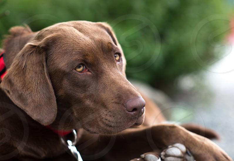 Good boy! photo