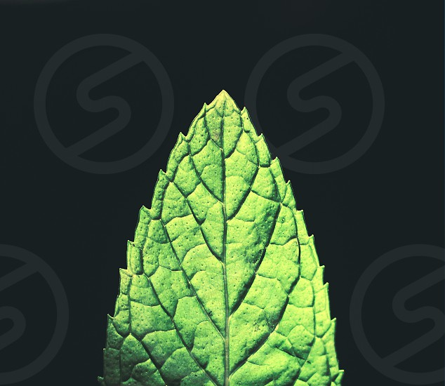 a illuminated close-up mint leaf on dark background photo