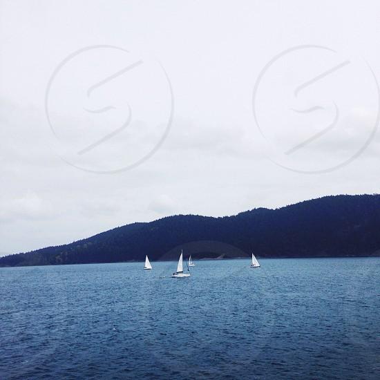 white sail boats on open sea view photo