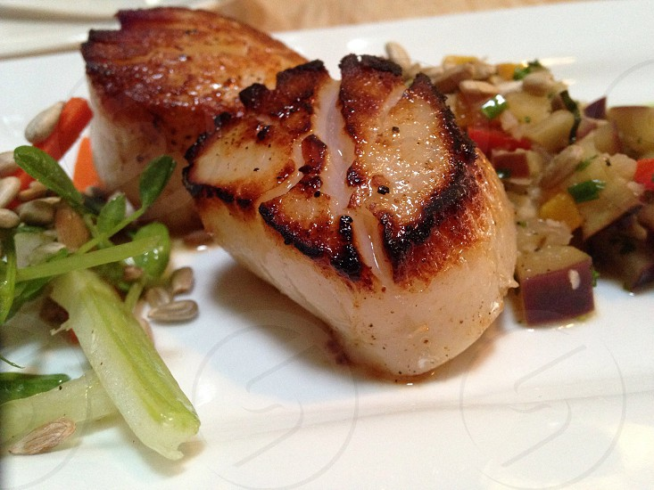Scallops from tanglewood photo