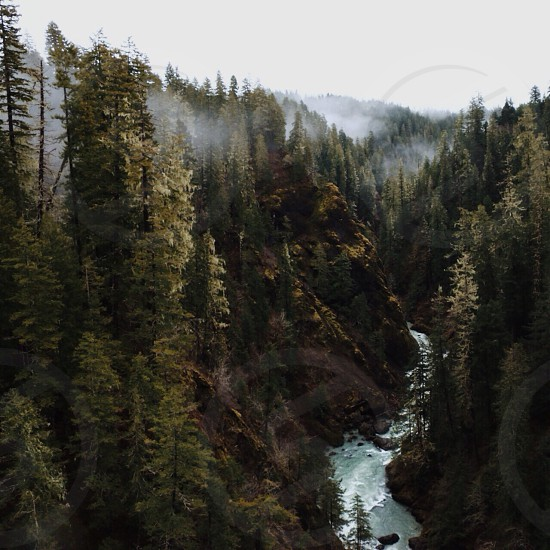 tall tress surrounding a raging river photo