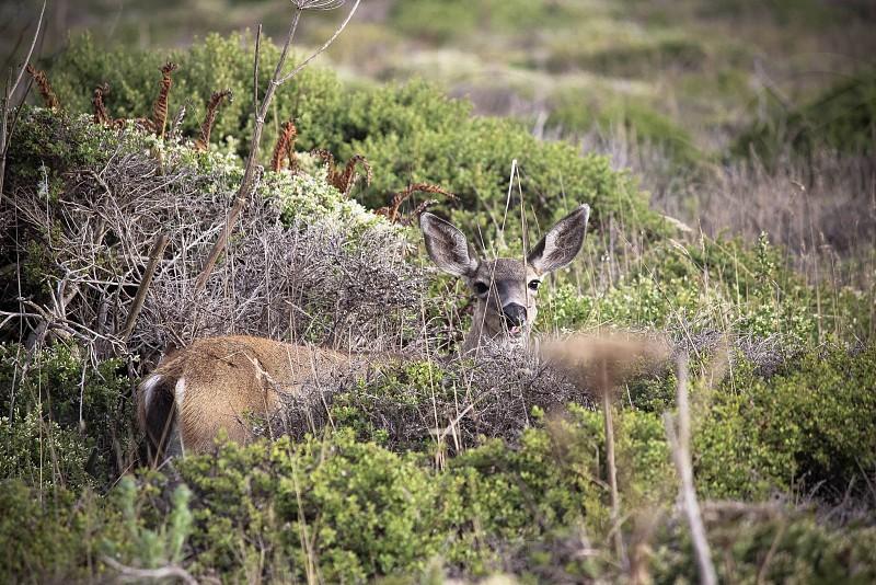 Deer in grass photo