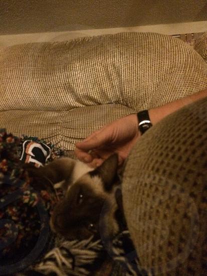 Relaxing Siamese photo