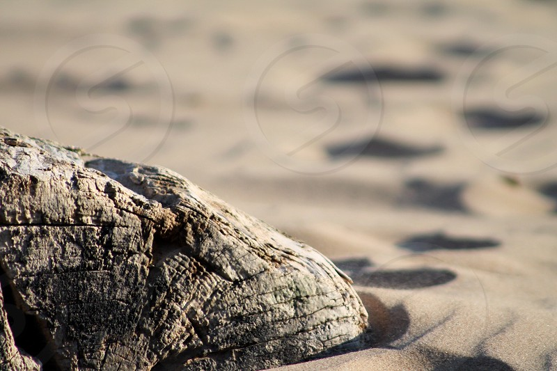 Driftwood on the soft sand photo