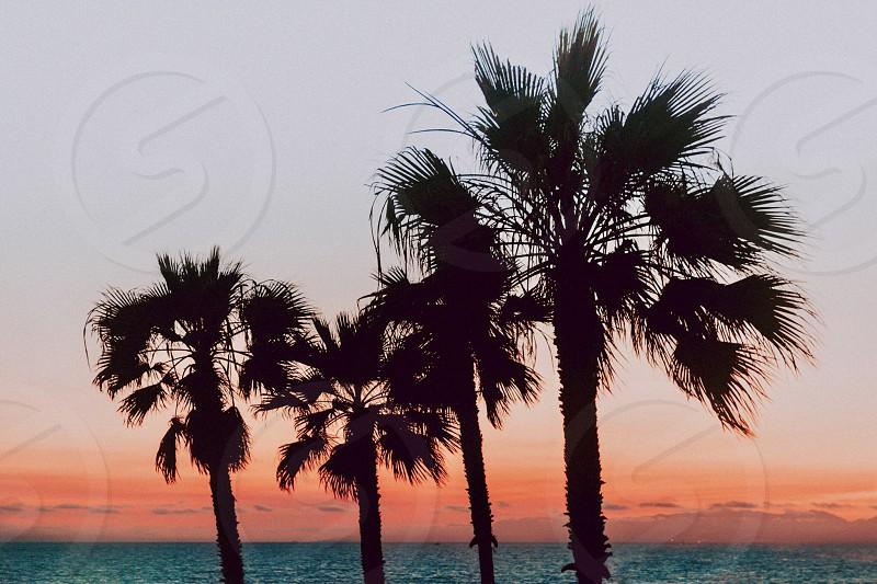 Sunset ocean. Beach California Sky  photo