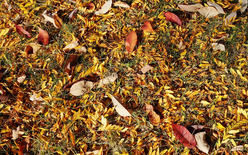 leaves autumn fall yellow red seasonal carpet photo