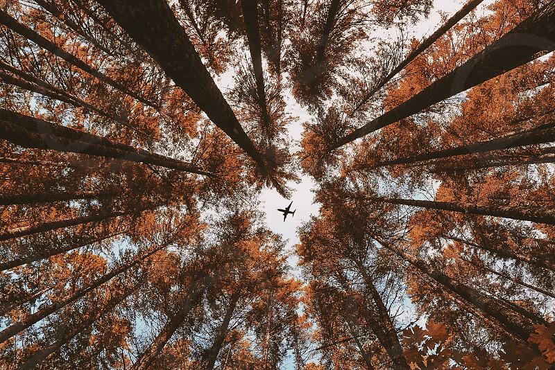 airplane on flight seen through trees photo