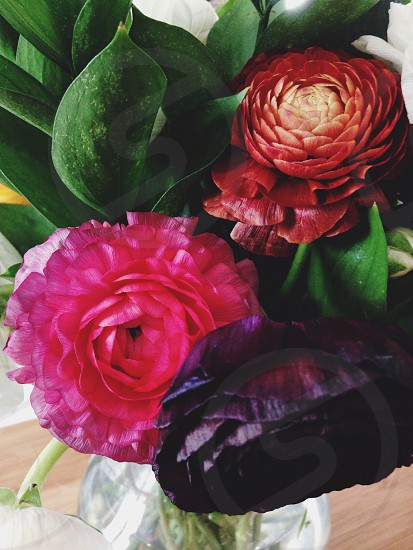 ranunculus bouquet flowers bunch floral color red pink purple green greenery wood vase glass buds sprouts stems leaf photo