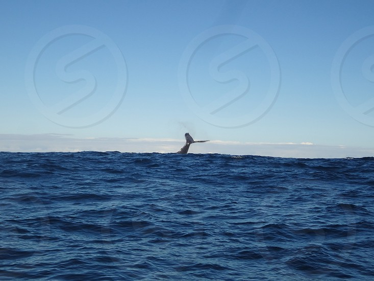 The tail of a whale on the divide between water and air. photo