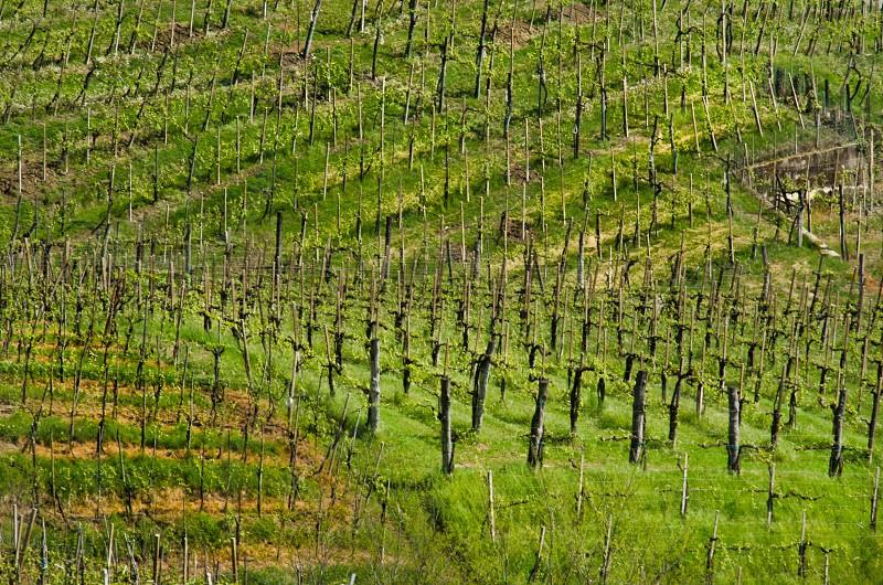 Cartize DOCG zone - Veneto Italy photo