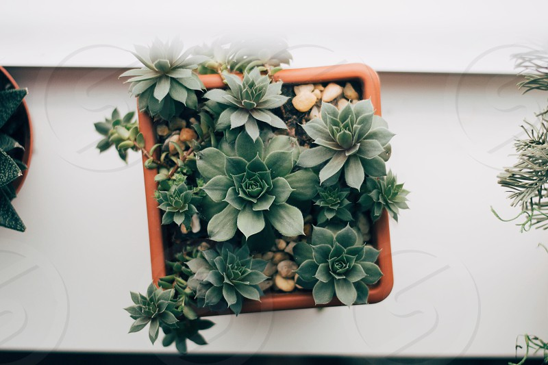 potted green succulent plant photo