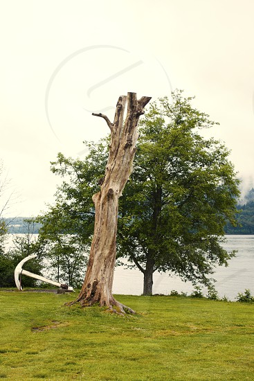 Vancouver dead tree anchor river cloud  photo