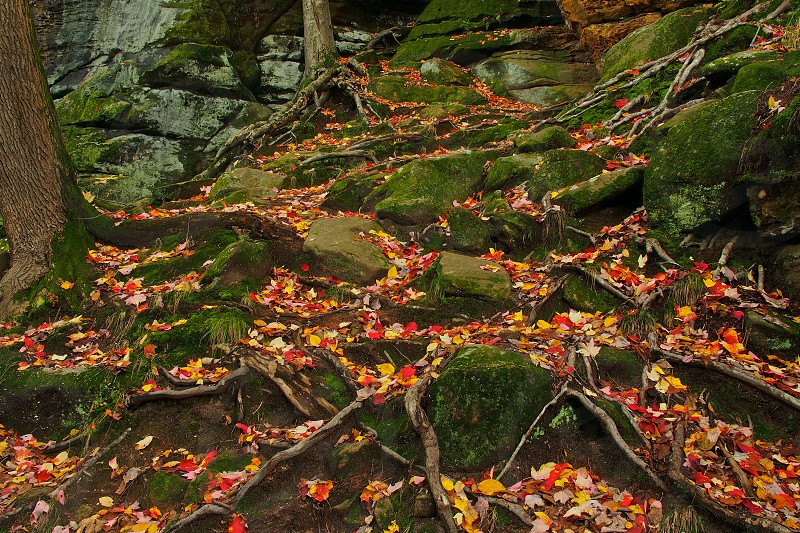 Autumn. Leaves. Fall. Trees. Cuyahoga Valley. Virginia Kendall Ledges. photo