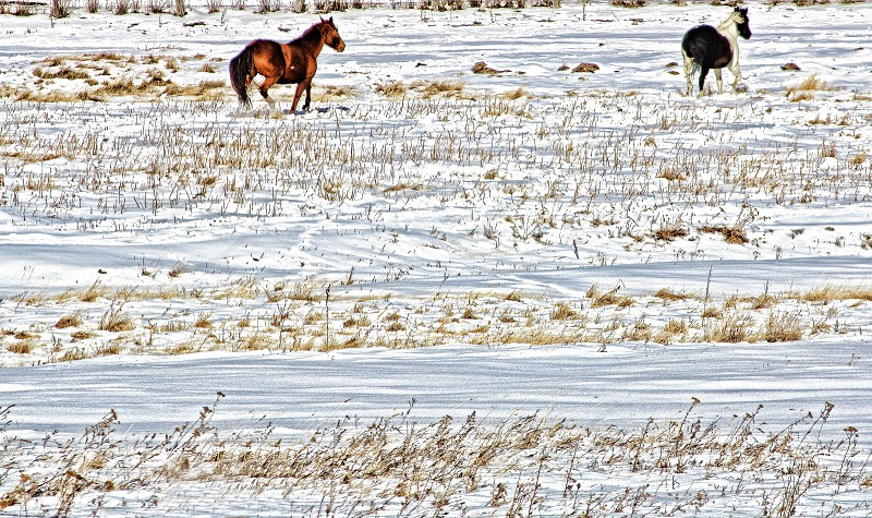 Horses galloping in the snow photo