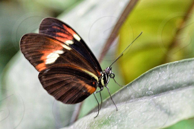 Macro butterfly vibrant orange Arthropods insects bugs close up nature wings flora fauna colorful spring photo