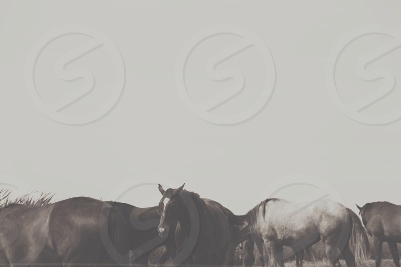 black and brown horse photo photo