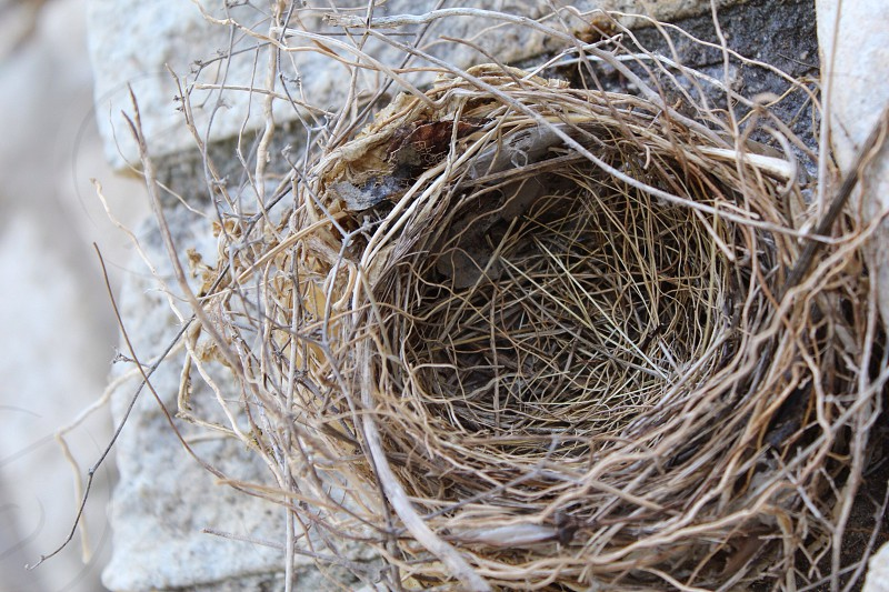 Birds nest  photo