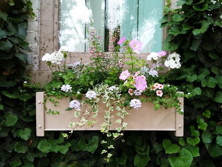 window planter  photo