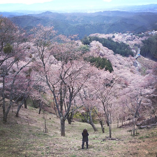 man standing on grass field near pink cherry blossom trees during day photo