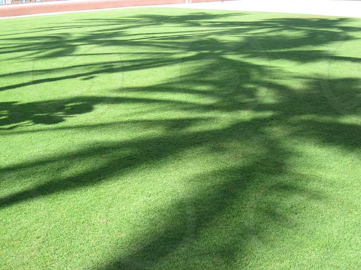 green sod grass field photo