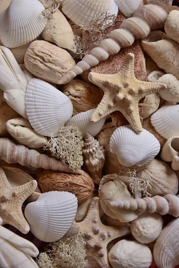 bulk of white and beige seashells decor photo
