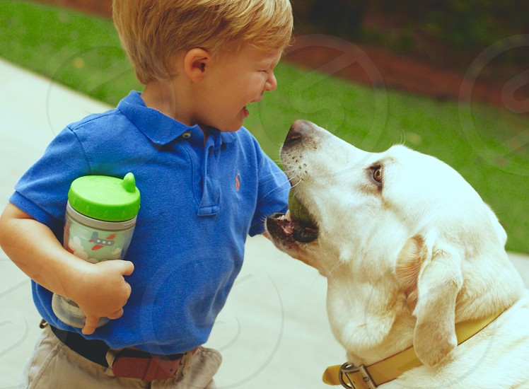 Blonde Haired Boy Holding Sippy Cupy with White Labrador photo