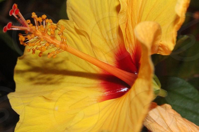 Flowerspringyellowred photo