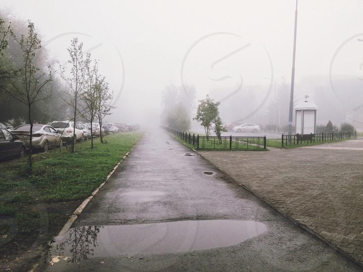 fog city russia street trees nature beautiful morning good morning rain photo