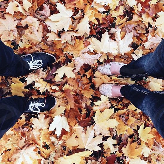 persons standing on brown autumn leaves photo