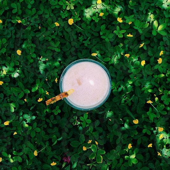 blue cup on the green plant covered ground photo