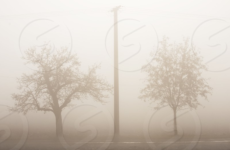 fog with trees and power mast photo