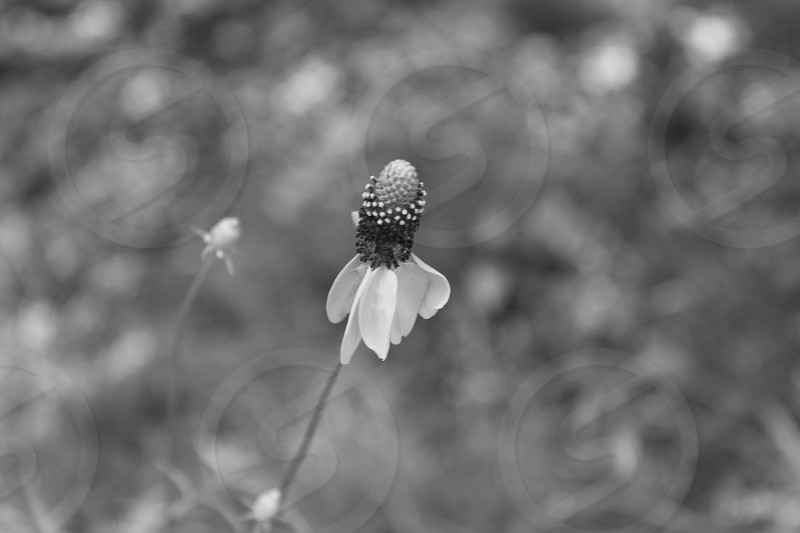 Black and white moments photo