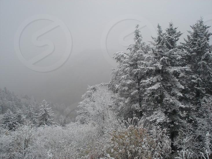 """Winter Landscape"" photo"