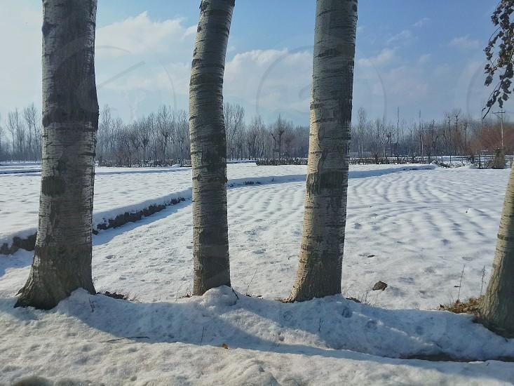 Frozen Fields Kashmir photo