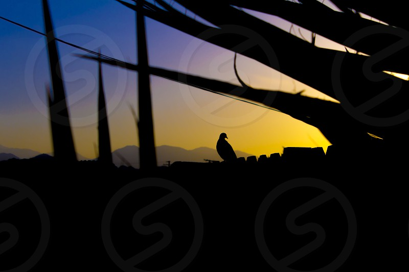Last Minute Thinker. sunset bird concept desert photo