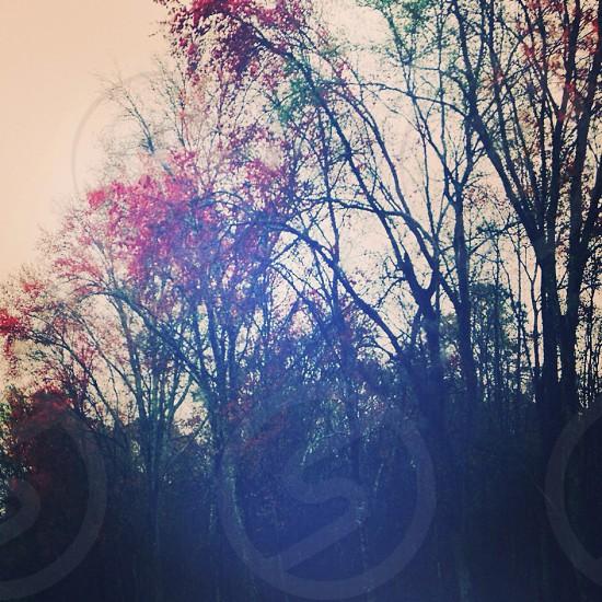 winter leaves photo