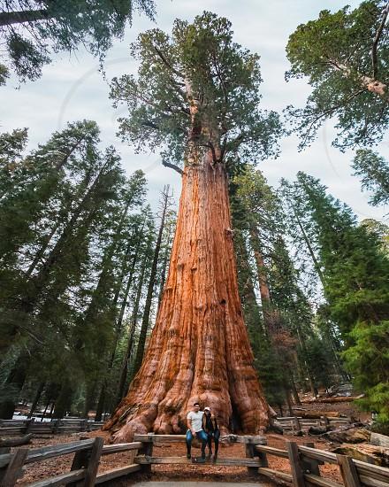 Sequoia National Park tree red wood travel adventure explore photo