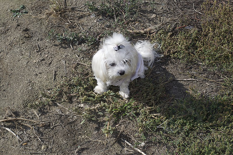 my small white dog in the garden photo