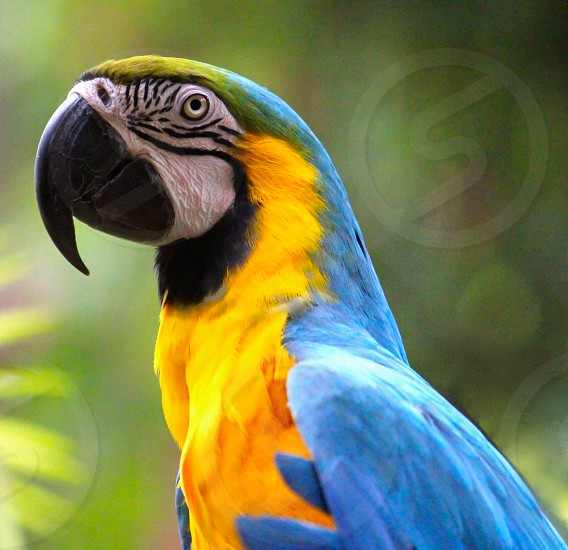 shallow depth of field photo of blue and golden macaw photo