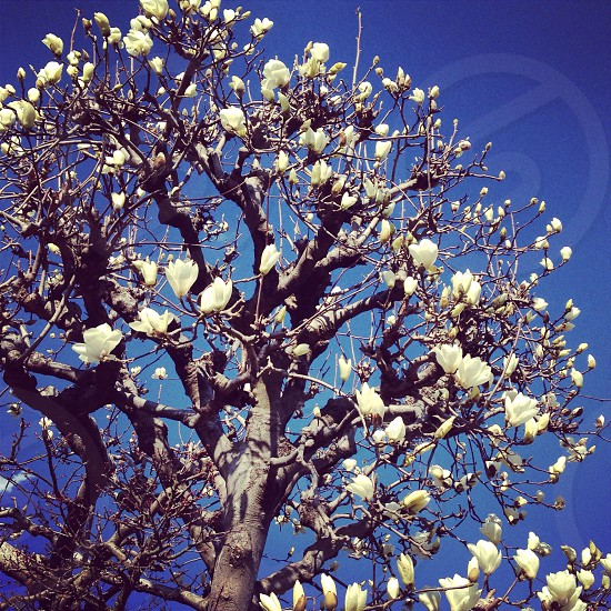 white leaf tree under blue sky at daytime photo