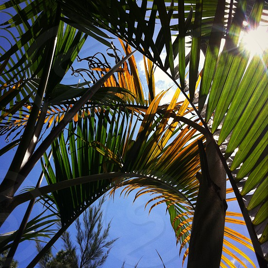 Sun's shining. photo
