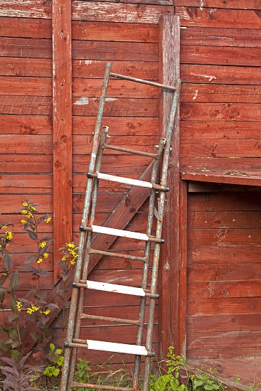 Old ladder leaning against a red colored wooden wall photo