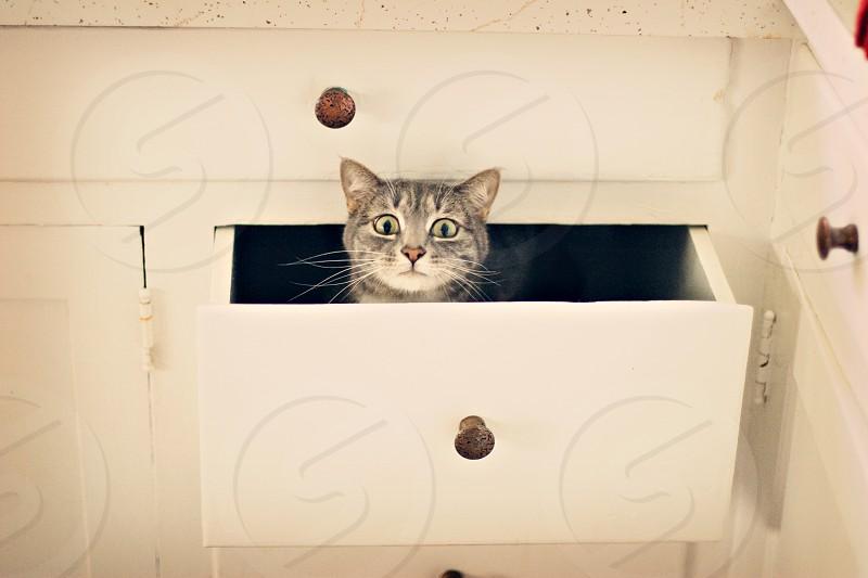 Funny cat pet photo