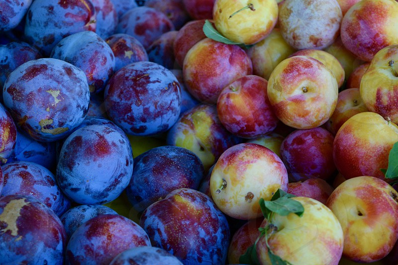 black and yellow plums sold at farmers market photo